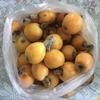 【無料】高級フルーツ「びわ」を食べてお金と健康を守る!