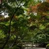 大田黒公園の夏紅葉