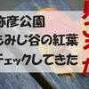 おすすめの紅葉人気スポット【弥彦公園もみじ谷】見ごろ一歩手前だった!!予想はずれた(><)