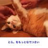 猫による言い訳をする元猫飼い