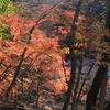 【香嵐渓へ】冬が来る前に、秋の紅葉へ