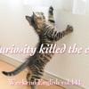 【週末英語#141】「Curiosity killed the cat」好奇心は猫を殺す……?
