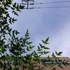 作曲工房 朝の天気 2017-09-21(木)晴れ メキシコ地震続報