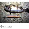 釣れるプラグと釣れないプラグ ID:610ftn