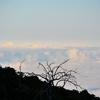 「マウナケア山頂 サンセット&星空観測ツアー」 ~オニズカ・ビジターセンターまで