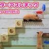 【ハムスター 動画】こんな事ってある!?ハムスター専用アスレチックを作った結果、まさかの展開に…(笑)A hamster aiming for a snack athletic!