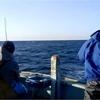 新春の強風の中マダイ釣り