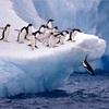 学生はファーストペンギンになるべき理由