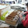 クッション材づくり タルトの包装 ブルーベリーの剪定8