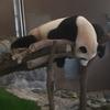 こんなにたくさん!?パンダが見たいなら和歌山へ行こう!