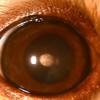 目の表面(角膜)が白い