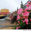【大阪】薔薇の中庭