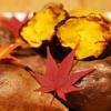 スポーツの秋、そして食欲の秋。かぼちゃ、焼き芋!「秋の味覚」を使ったスイーツをご紹介