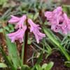 「佐久の季節便り」、「お花見」は、家で自粛して…。