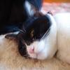 今日の黒猫モモ&白黒猫ナナの動画ー707