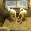 牧場で動物達とふれあいました(子供達が)