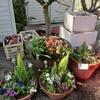 植え付けシーズン:寄せ植え