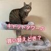 キャットタワーの替え時は?11年で4代目を購入!猫は喜んでくれる?