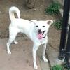愛犬を連れて駒沢公園のドッグランへ