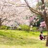 近所の桜2020