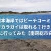 白浜・根本海岸ではビーチコーミング出来る?タカラガイは?行き方は?トイレは?自動販売機は?行ってみた。【館山】