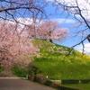 天目マサトからの桜便り〝丸墓山古墳〟