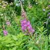 「佐久の季節便り」、「ひろば・賢治ガーデン」、夏の花が見頃に…。