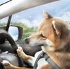 僕たち、車に弱いんだ - We Don't Enjoy a Drive