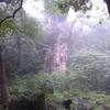 【世界自然遺産の島・屋久島】私の縄文杉「トレッキング」は修行だった【本編③】