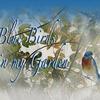 HPでご紹介いただきました♪♪♪ ~BLUE BIRDS~ KIMIKO Koutaki さん