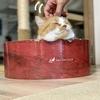 ガリガリサークルでとろける週末の愛猫