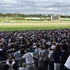 2018 神戸新聞杯 感想戦