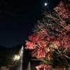 大阪北部の紅葉の名所「勝尾寺」紅葉ライトアップ