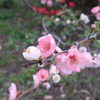 2019.3.30の三渓園の花たち