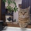 【ミヌエット】そろそろ成猫*フード選び