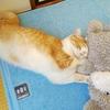 猫とわたし