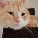 ぼくはねこ|猫ブログ