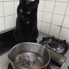 今日の黒猫モモ&白黒猫ナナの動画ー847