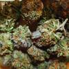 世界の大麻解放状況のまとめ 2010-2011