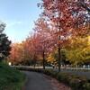 大高緑地(名古屋市)までロング走 × 紅葉狩りをしてきました!