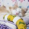 猫の手術までの道のり!リラックスする日々について