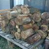 薪ストーブ前史・総集編①「はじまりはいつも針葉樹」