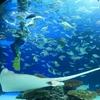 【サンシャイン水族館】アクセス、見どころ、GWの混雑状況は?