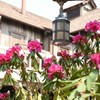 高嶺の花の由来の花