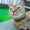 8月前半の #ねこ #cat #猫 どらやきちゃんA