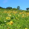 【霧ヶ峰】灼熱風呂のような暑さに登る八ヶ岳、ニッコウキスゲが黄色く輝く山旅