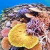 サンゴに優しい日焼け止め【海を愛する全ての人へ】海の環境を守る