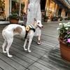 DJI Pocket 2 で犬を撮る