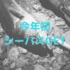 【淀川】今年初シーバス釣ったぜぇ。【武庫川】