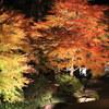 江戸東京たてもの園 紅葉とたてもののライトアップ その2